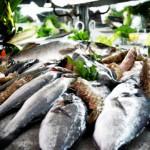 Hangi Mevsimde Hangi Balık Yenir? – Levreklere Hükmeden Adamdan Balık Mevsimleri