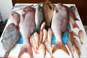 berk balık